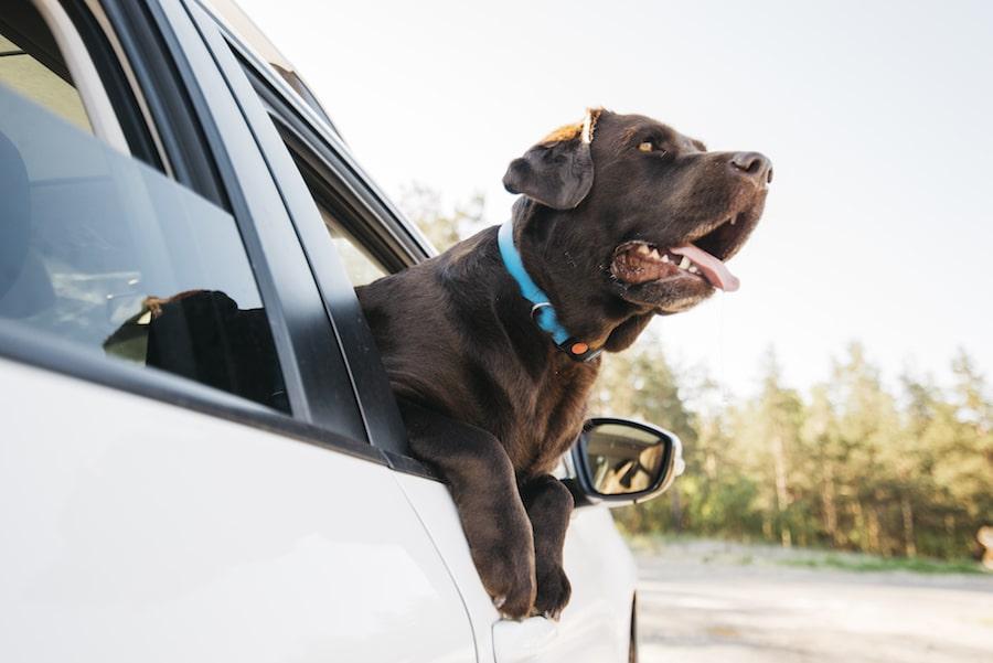 ¿Cómo transportar a tu mascota?