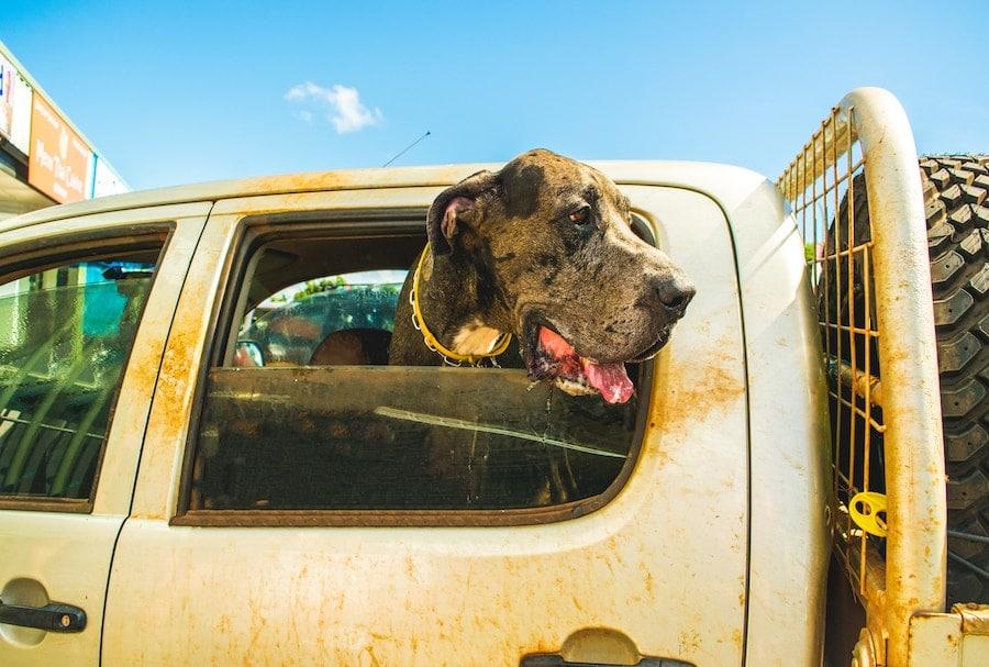 Consejos para transportar a tu mascota